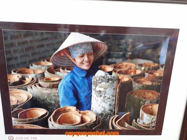 Giá vỏ quế ở đâu tốt nhất tại Hà Nội? 3