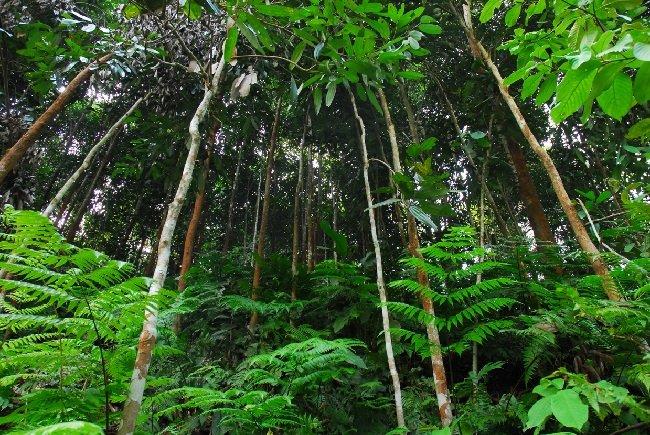 Phát triển kinh tế nhờ cây quế ở Yên Bái 1