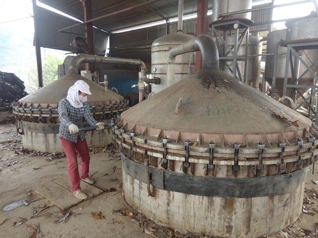 Quy trình chiết xuất tinh dầu quế mang lại hiệu suất cao 5